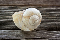 Спиральная раковина моря Стоковые Изображения