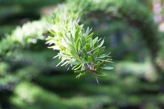 Спиральный зеленый кактус Стоковое Изображение