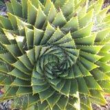 Спиральный дизайн в природе. стоковое фото rf