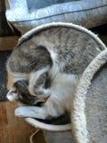 Спиральный кот стоковое фото