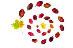Спираль листьев осени изолированных на белой предпосылке стоковые фото