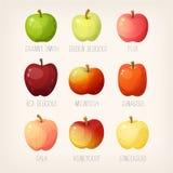 Список яблок бесплатная иллюстрация