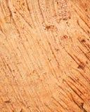 Спиленная деревянная поверхность Стоковые Фото