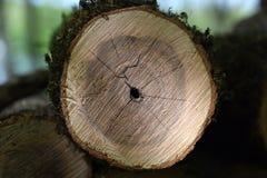 Спиленная деревянная текстура Стоковая Фотография