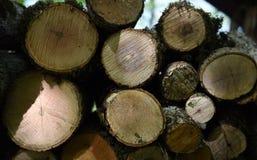 Спиленная деревянная текстура Стоковое Фото