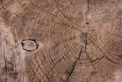 спиленная древесина Стоковые Изображения