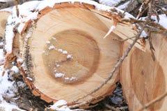 Спиленные деревянные журналы и малые хворостины в снеге Стоковая Фотография RF