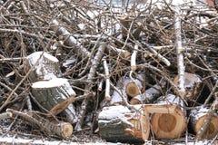 Спиленные деревянные журналы и малые хворостины в снеге Стоковое фото RF