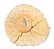 Спиленный изолированный отрезок дерева березы Стоковые Фотографии RF