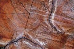 Спиленный ствол дерева вишневого дерева Стоковые Изображения RF