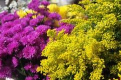 Сплавливание сочетания цветов фиолетовое и желтое на дисплее в рынке Гондураса стоковая фотография