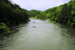 сплавлять whitewater Стоковое Изображение