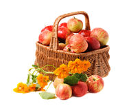 сплетенная корзина яблок Стоковые Фото