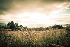 Спокойная концепция: Предпосылка восхода солнца луга страны Стоковое Изображение
