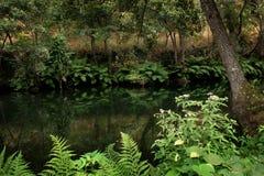 Спокойная подача реки стоковые фотографии rf