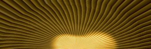 Спокойная предпосылка составленная источника света Стоковая Фотография RF