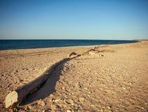 Спокойная предпосылка ландшафта с сиротливым хоботом на песке Стоковое Фото