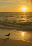 Спокойная чайка и заход солнца Стоковое Изображение RF