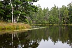 Спокойное озеро глуш стоковые фотографии rf