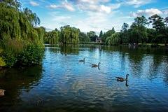 Спокойное после полудня лета на озере в парке, Бирмингем, Англия Стоковое Изображение RF
