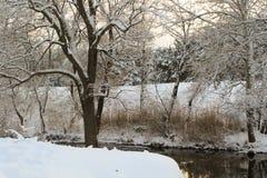 спокойное река бежать через туманные поля Стоковые Фотографии RF