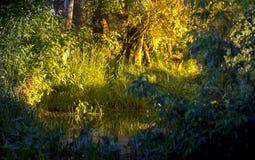 Спокойное река в древесинах, заход солнца летнего дня Стоковые Фотографии RF
