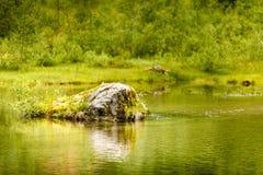 Спокойное река в лете, Норвегия Стоковое Фото