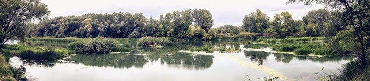 Спокойное река в утре лета с зелеными деревьями на предпосылке Стоковые Изображения