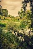 Спокойное река в утре лета с зелеными деревьями на предпосылке Стоковое Фото