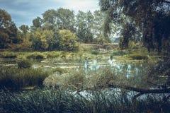 Спокойное река в утре лета с зелеными деревьями на предпосылке Стоковое Изображение RF