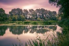 Спокойное река в утре лета с зелеными деревьями на предпосылке Стоковая Фотография