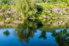 Спокойное река с деревьями на речном береге Стоковая Фотография RF