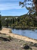 Спокойное река с зелеными соснами в национальном парке стоковая фотография rf