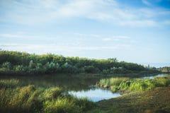 Спокойное река с лесом Стоковые Фотографии RF