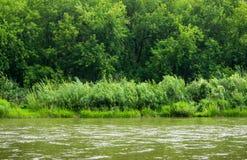 Спокойное река с лесом Стоковые Фото