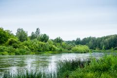 Спокойное река с лесом Стоковое Изображение