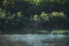 Спокойное река с лесом Стоковое Изображение RF