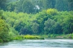 Спокойное река с лесом Стоковая Фотография