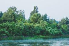 Спокойное река с лесом Стоковые Изображения RF