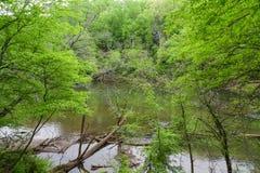 Спокойное река через зеленые деревья Стоковая Фотография RF