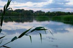 Спокойное тихое река в утре на зоре Стоковое Изображение