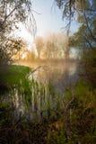 Спокойное туманное утро на береге озера стоковое изображение rf