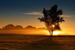 Спокойное утро тумана Стоковое Изображение RF