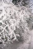 Спокойное утро overcast в ветвях снежного леса тонких молодых деревьев согнуто под обильным заволакиванием снега стоковые изображения