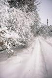 Спокойное утро overcast в ветвях снежного леса тонких молодых деревьев согнуто под обильным заволакиванием снега стоковое фото rf