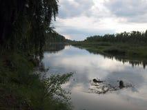 Спокойные деревья реки на береге стоковая фотография