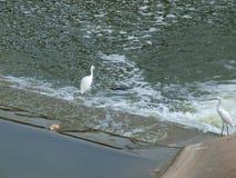 Спокойные и спеша воды Стоковое Изображение
