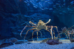 Спокойные медузы Стоковая Фотография