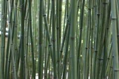 Спокойный бамбук в японском саде Стоковое Изображение