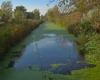 Спокойный взгляд на болоте на времени осени стоковые изображения rf